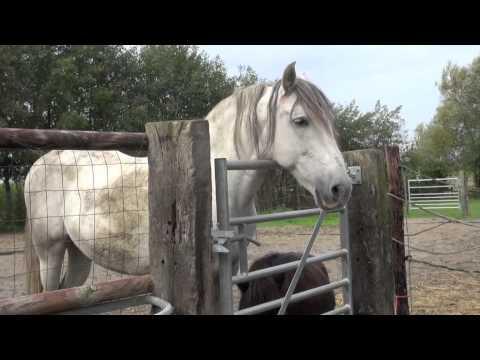 habits horse