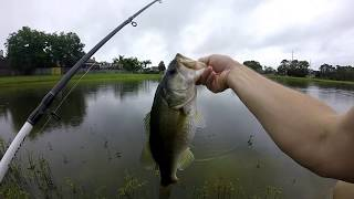 Bass Fishing a Florida Retention Pond