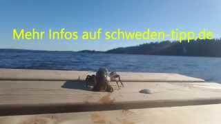 Krebse fangen Schweden