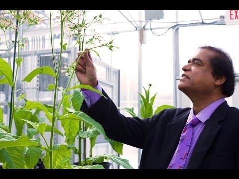 Delivering Medicine Through Lettuce, World Altering Medical Advancements
