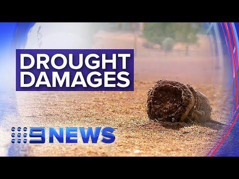 NSW government investigates drought damage | Nine News Australia