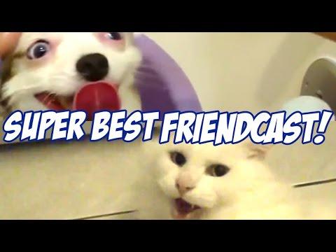 Super Best Friendcast  Cat