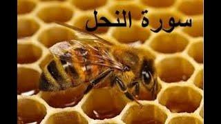 هزاع البلوشي   سورة النحل   Hazza Alblushi ||