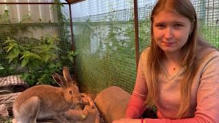 """Почему не надо «спасать» зайцев из природы. О зайчатах и людях. """"Дом зайца"""" часть 1"""