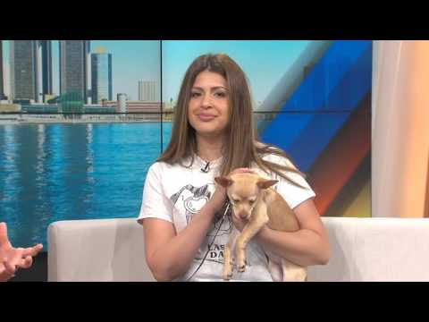 Pet of the Week: Chihuahua named Fajita from Last Day Dog Rescue