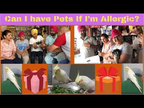 Can I have Pets If I'm Allergic?