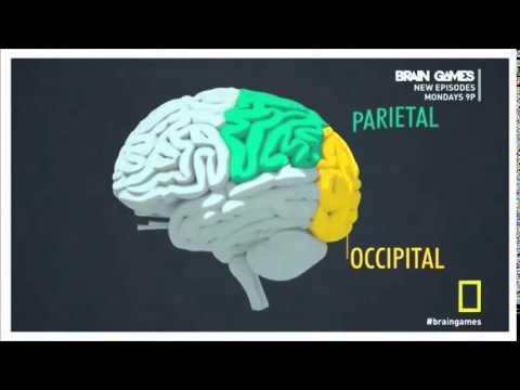 Brain Games- Mere Exposure Effect