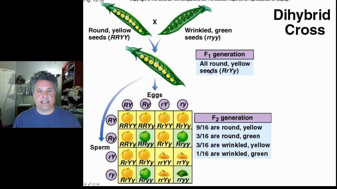 Genetics - Wikipedia