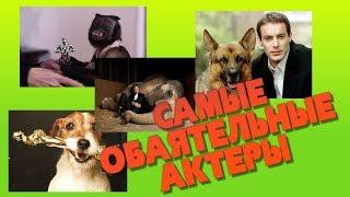 Топ-10 животных-актеров