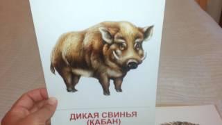 Дикие животные (1) демонстрационные картинки карточки