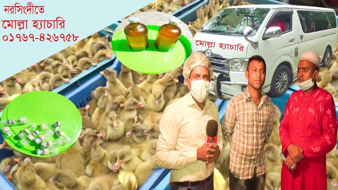 নরসিংদীতে মোল্লা হ্যাচারি ।। মোবাঃ 01767-426758 ।। হাঁসের খামার ।। হাঁস পালন ।। paultry farming ।।