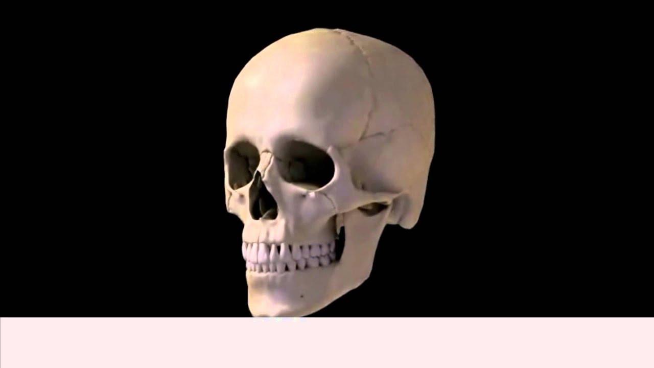 Skull Bones Youtube