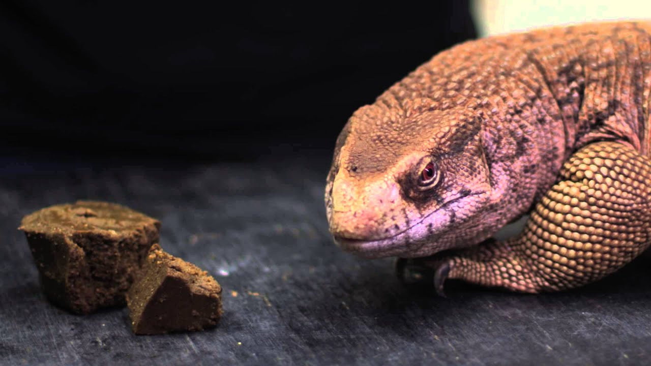 Mazuri Crocodilian Diet-Small 25lb