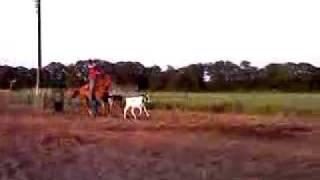 Sorrel horse for sale 3