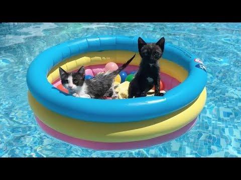 Mis gatitos bebés