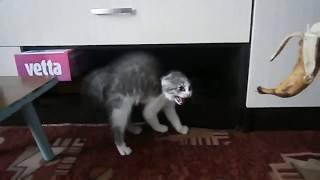 Коты против бананов и огурцов | Лучшие приколы с котами #2