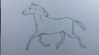 كيف أرسم حصان بطريقة بسيطة