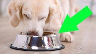 10 alimentos que jamás debes dar de comer a tu perro y no sabías
