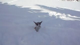 Little Dog Lost in Big Snow