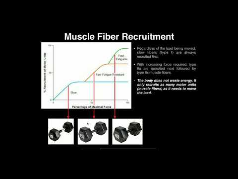 Exercise Physiology | Sequential Motor Unit Recruitment