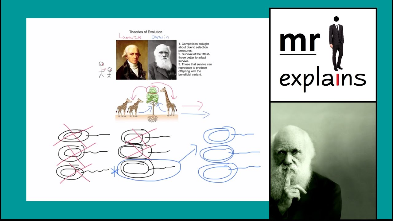 """a description of organism adaptation evolution of darwin Darwin had a reason to choose """"evolution"""" and """"evolve"""" instead of """"adapt"""" and """"adaptation"""" """"adapt"""" and """"adaptation"""" meant, in the mid 1800s, a trait that was the direct work of deity."""