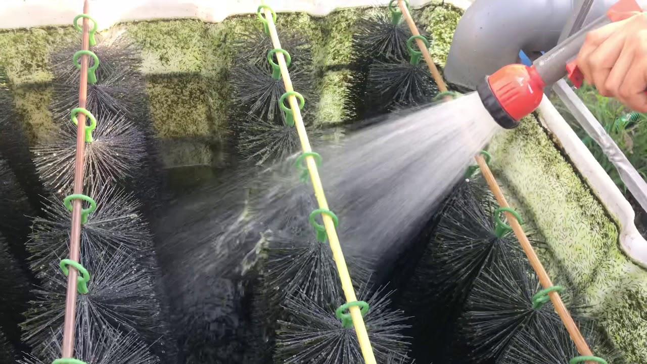 Bester Teichfilter 2020 Test Vergleich Alle Infos