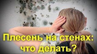 видео Грибок в ванной: как бороться с появлением и вывести (средства)