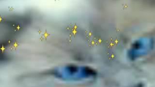 Котики фото