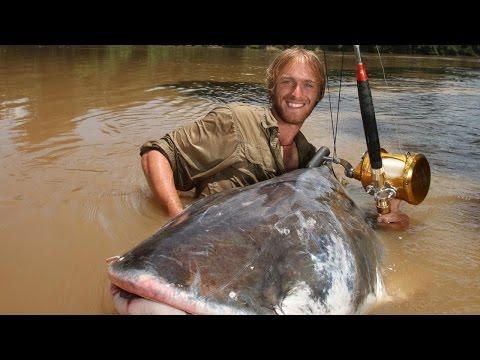 Giant catfish Mekong River ThaiLand - FISH MONSTER HUNTING