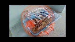 видео Клетки для грызунов Ferplast ( Ферпласт ) - RedDogShop. Лучшие зоотовары по выгодным ценам!