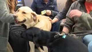 Law Society And Guide Dogs Puppy Room