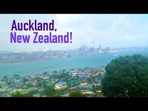 Let's Explore: Cat Cafés, Cabaret & Chilling in Auckland!