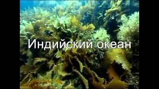 География океаны