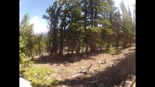 This is a video of me hiking Pike National Forest with my Tosa Inu ...