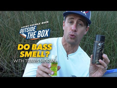 Do Bass Smell Bait Scents?