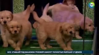 Поймай удачу за хвост  щенки из приютов сыграют в футбол   МИР24