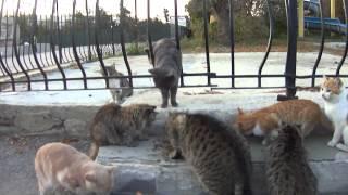 кормление котов Коктебеля