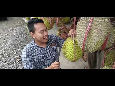 Jawa Pos Belah Durian Episode 33: Durian Ripto Trenggalek