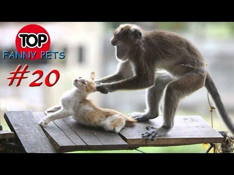 5 МИНУТ СМЕХА/Лучшие приколы март/ПРИКОЛЫ 2019/ТОП СМЕШНЫХ ВИДЕО/Смешные животные/Смешные кошки