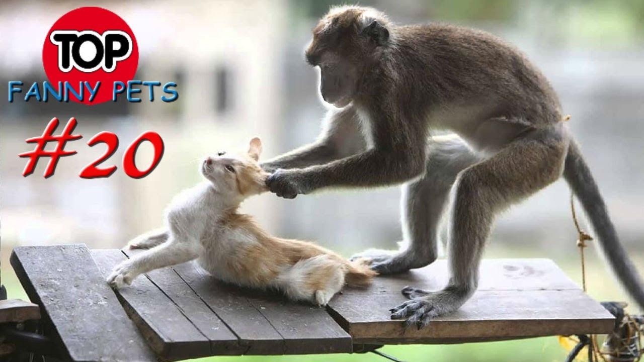 5 Минут Смеха/Лучшие Приколы Март/Приколы 2019/Топ Смешных Видео/Смешные Животные/Смешные Кошки | Смотреть Лучшие Приколы про Животных