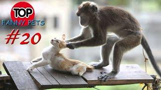 5 МИНУТ СМЕХА Лучшие приколы март ПРИКОЛЫ 2019 ТОП СМЕШНЫХ ВИДЕО Смешные животные Смешные кошки