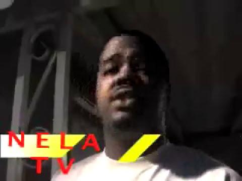 Pit bull fight!