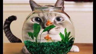 Прикольные и смешные коты и кошки ЧАСТЬ 3/ FUNNY CATS PART 3