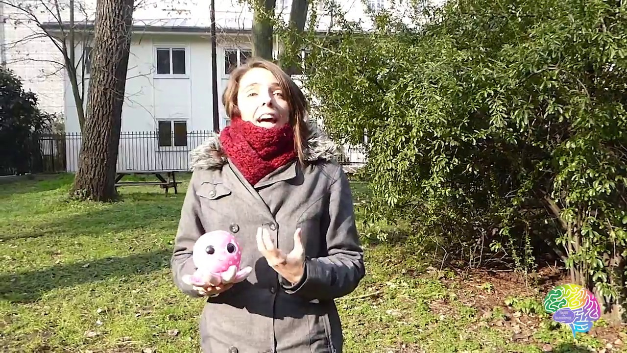 Monica Barbir Semaine Du Cerveau 2018 Youtube
