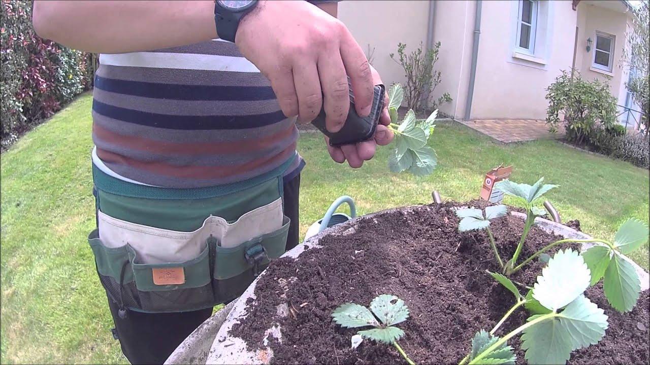 planter des fraisiers en jardini res youtube. Black Bedroom Furniture Sets. Home Design Ideas