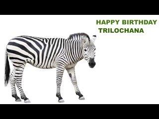 Trilochana   Animals & Animales - Happy Birthday