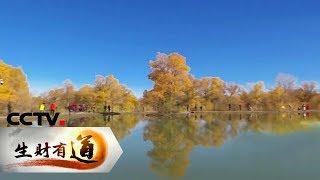 《生财有道》 20191105 甘肃金塔:胡杨美 特产俏 旅游忙  CCTV财经