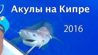 Акула в Лимассоле на Кипре 23/4/2016. Что делать туристам на Кипре? Shark in Limassol - Open Waters