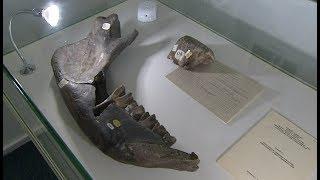 В Музее природы и человека открылась палеонтологическая выставка «Иных миров напоминание»