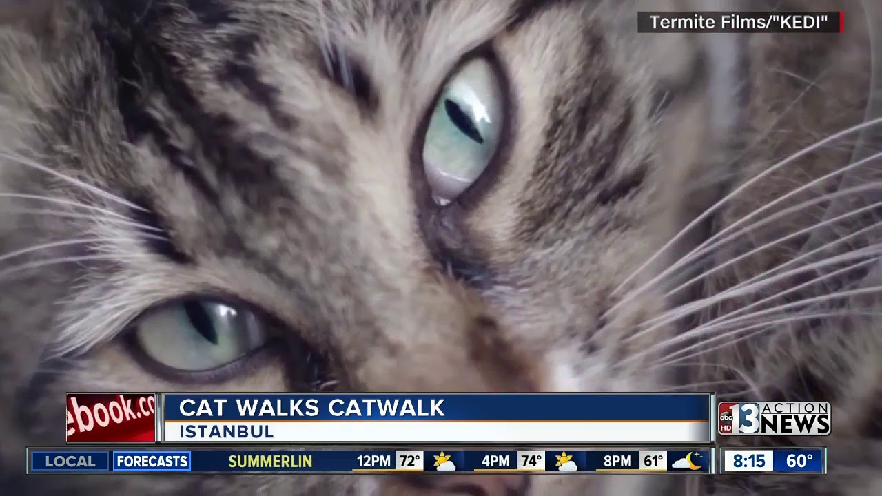 34e0746eaf Cat walks catwalk in Turkey - YouTube